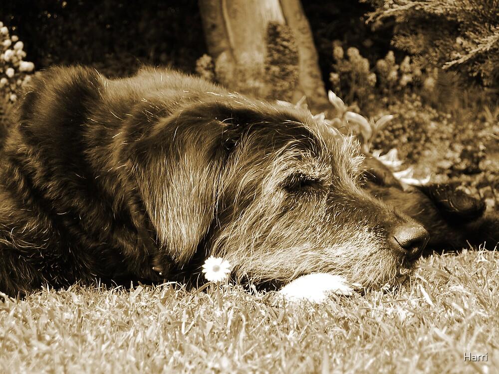 Lazy Summer Days by Harri