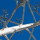 tree by reflexio
