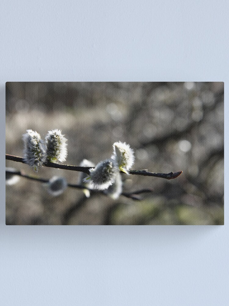 Alternate view of Spring Willow Canvas Print