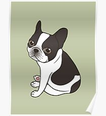 Say hello to the cute double hooded pied French Bulldog Poster