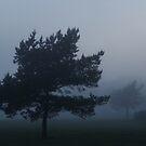 Foggy night by Bluesrose