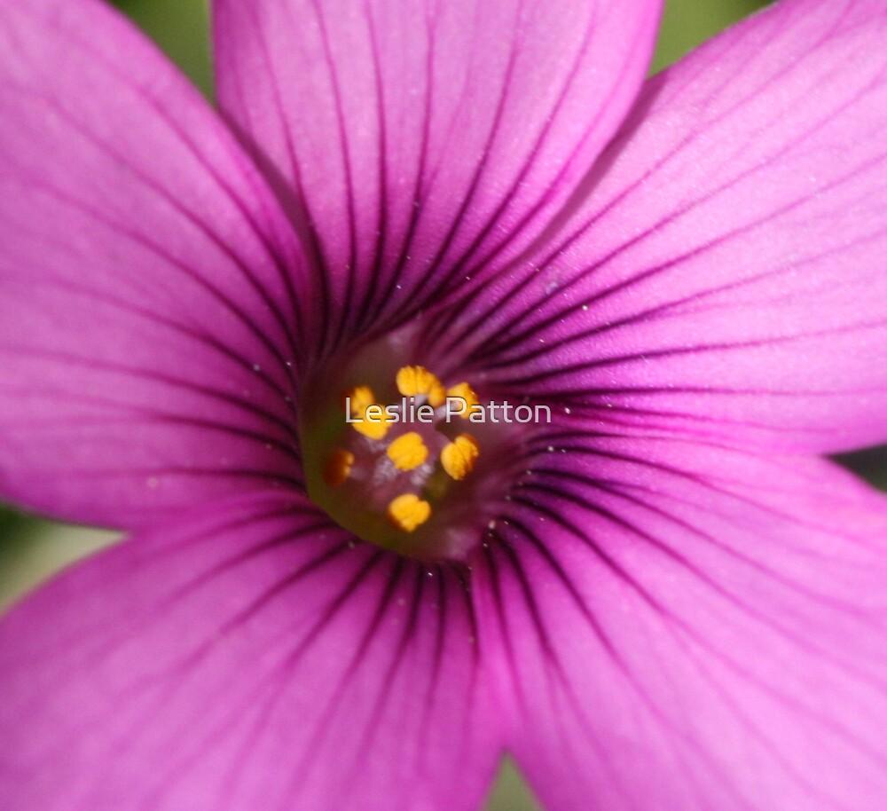 Purple by Leslie Patton