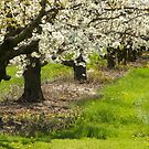 Niagara Orchards in Spring by Marilyn Cornwell