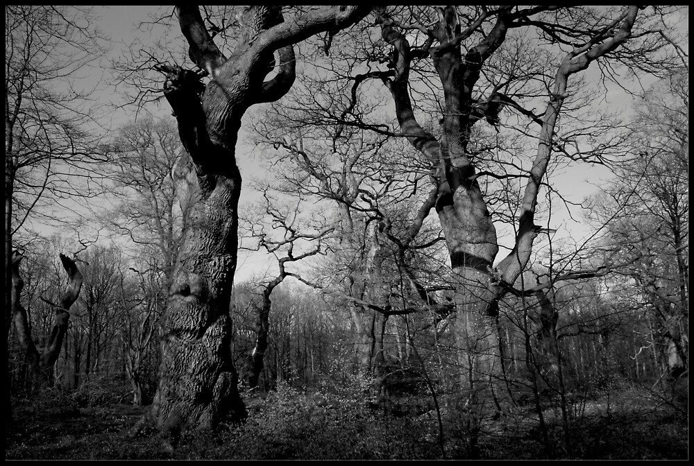 Tangled Wood by Graham Ettridge