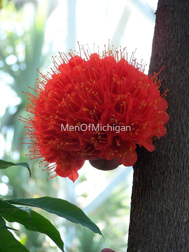 Fire Blossom by MenOfMichigan