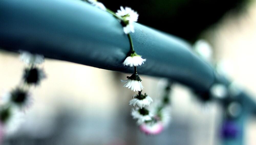 Daisy Chain by annnna