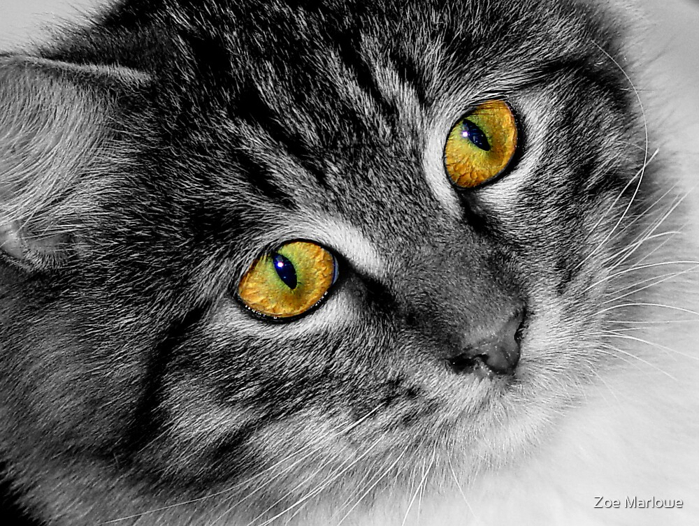 Golden Eyes by Zoe Marlowe