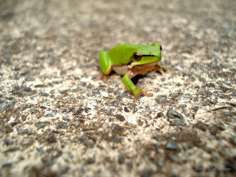 Green Tree Frog by Amy  Matheson