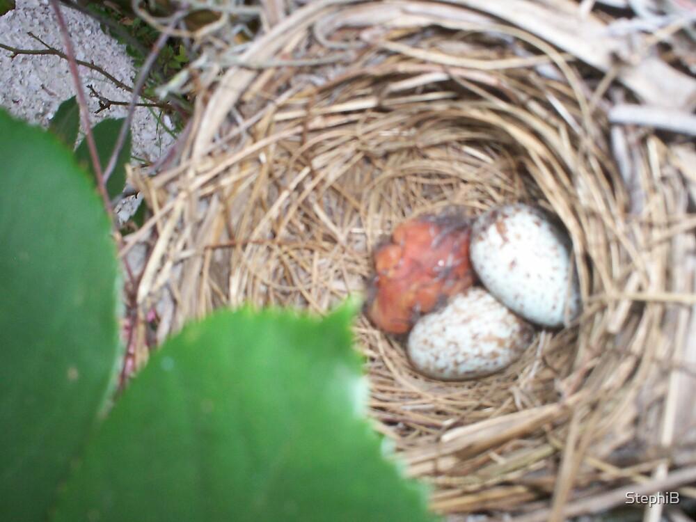 Birds Nest by StephiB