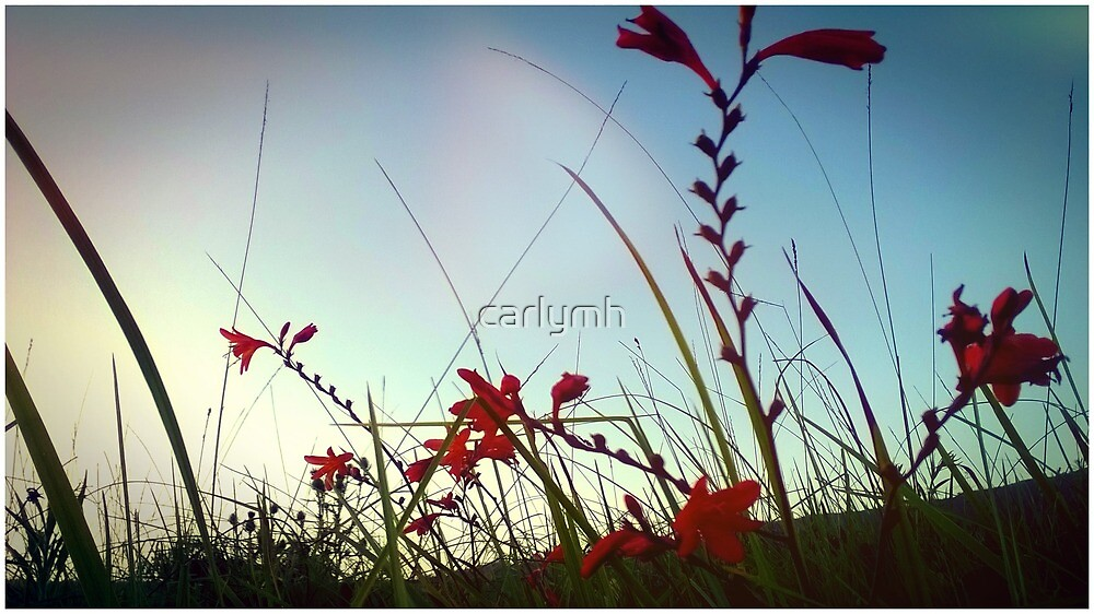 red bells by carlymh