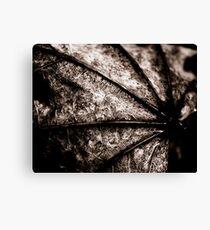 Leaf Spine Canvas Print