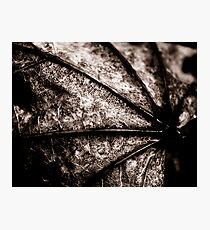 Leaf Spine Photographic Print