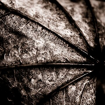 Leaf Spine by HouseofSixCats