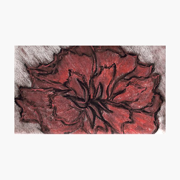 ROSE IN CHALK Photographic Print