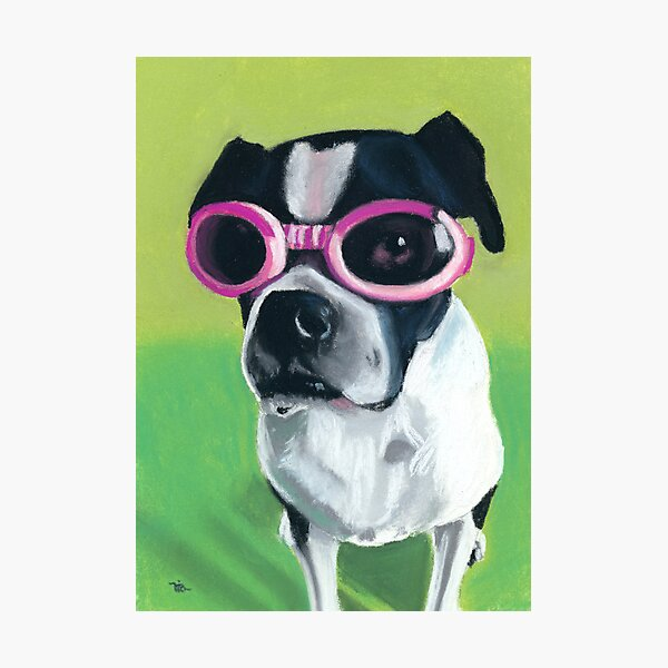 Boston Terrier in Goggles Photographic Print