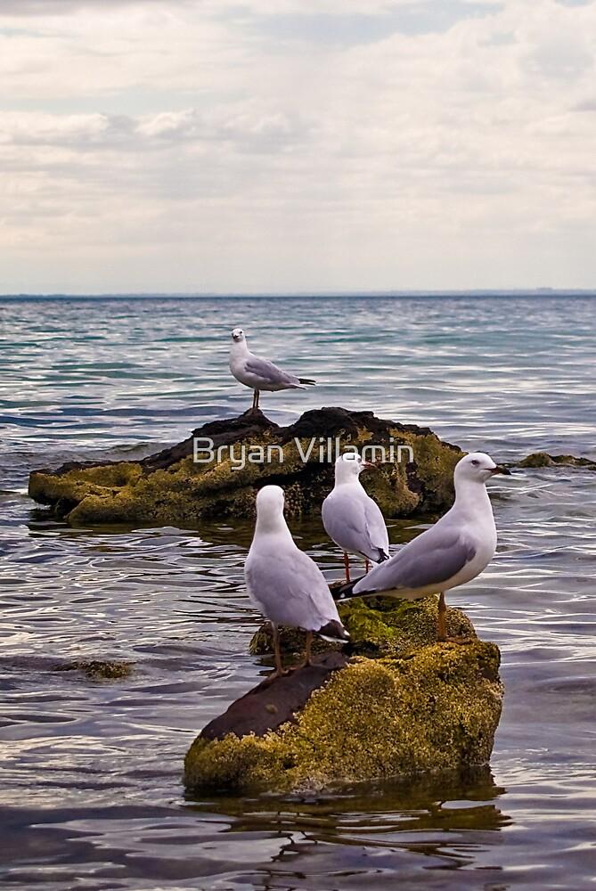 Pidgeon Islands by Bryan Villamin