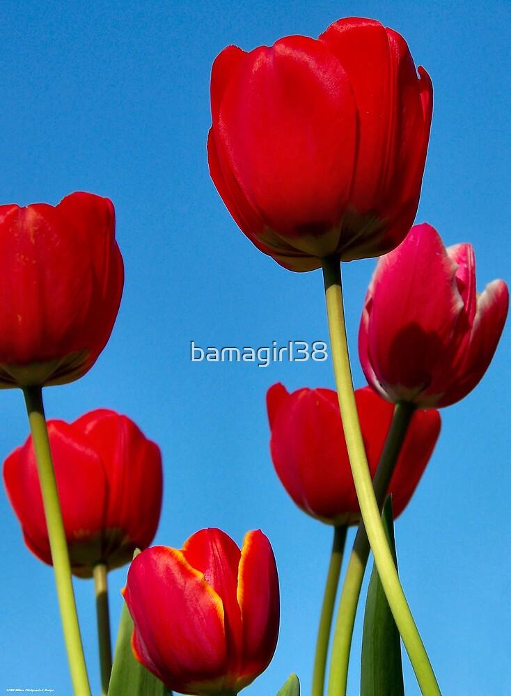 Springs Beautiful Colors by bamagirl38