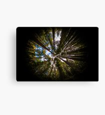 Forest by Fish Eye Lens Canvas Print