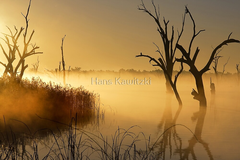 0886 Golden Morning - Lake Mulwala by Hans Kawitzki