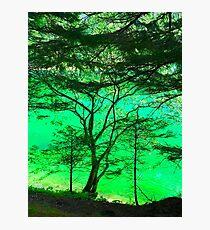 Tree & Green Lake 1 Photographic Print
