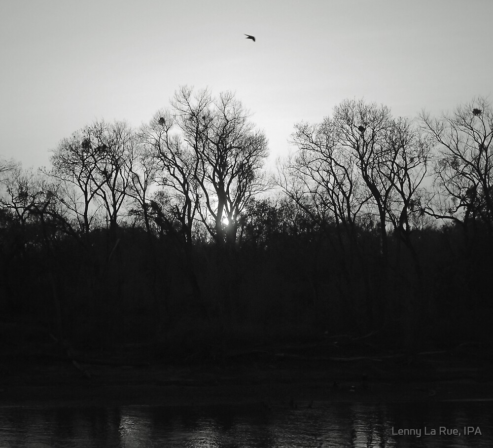 a swift's evening, B&W by Lenny La Rue, IPA