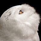 Snowy Owl by Dominika Aniola