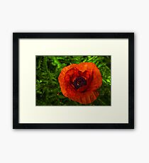 Red Poppy - Vibrant, Bold and Cheerful Framed Print