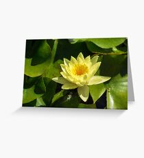 Soft Sunny Yellow - A Waterlily Impression Greeting Card