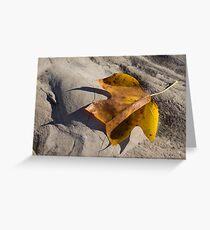 Tulip Tree Leaf - Shadow and Light Greeting Card