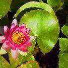 Pretty in Pink - a Waterlily Impression by Georgia Mizuleva