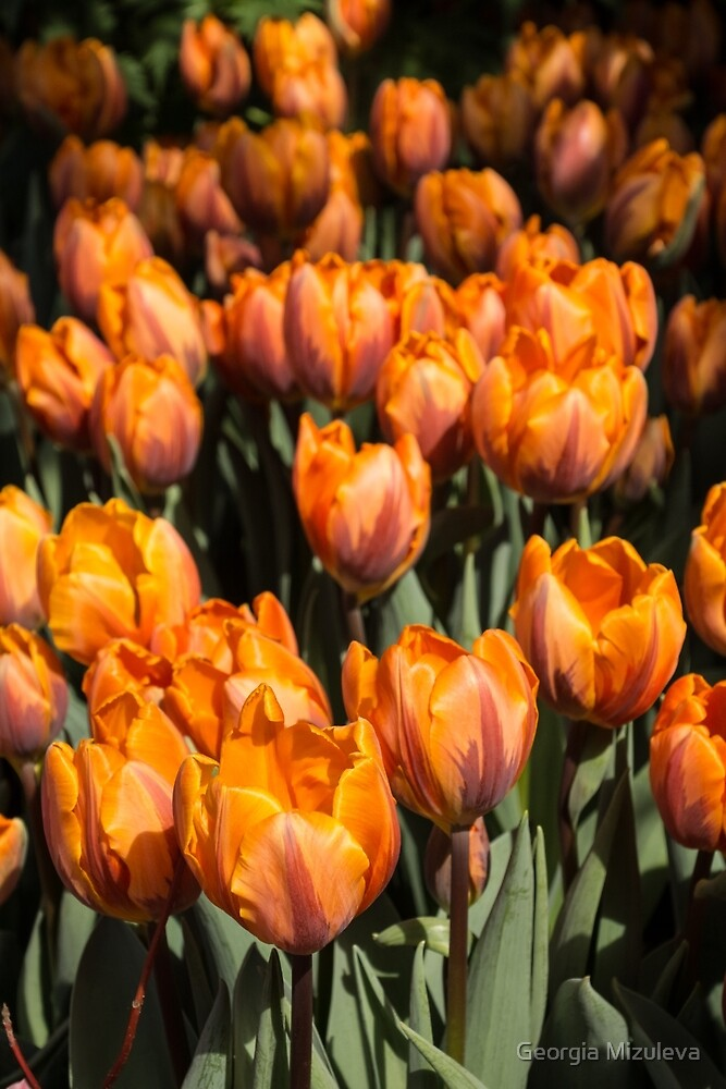 Tulips, Tulips, Tulips! by Georgia Mizuleva