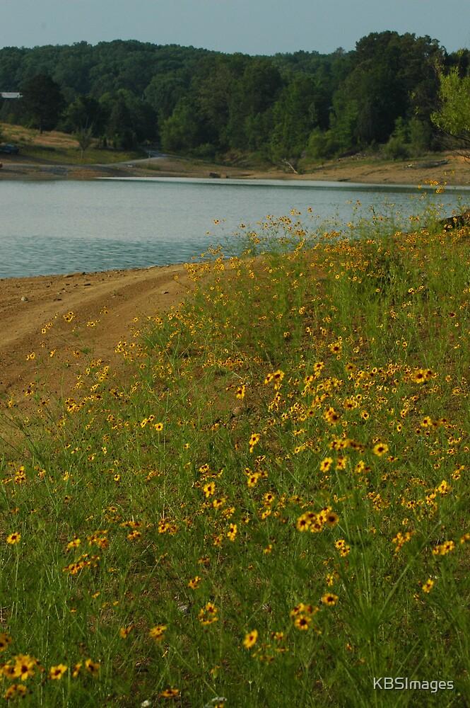 Lakeside Wildflowers by KBSImages