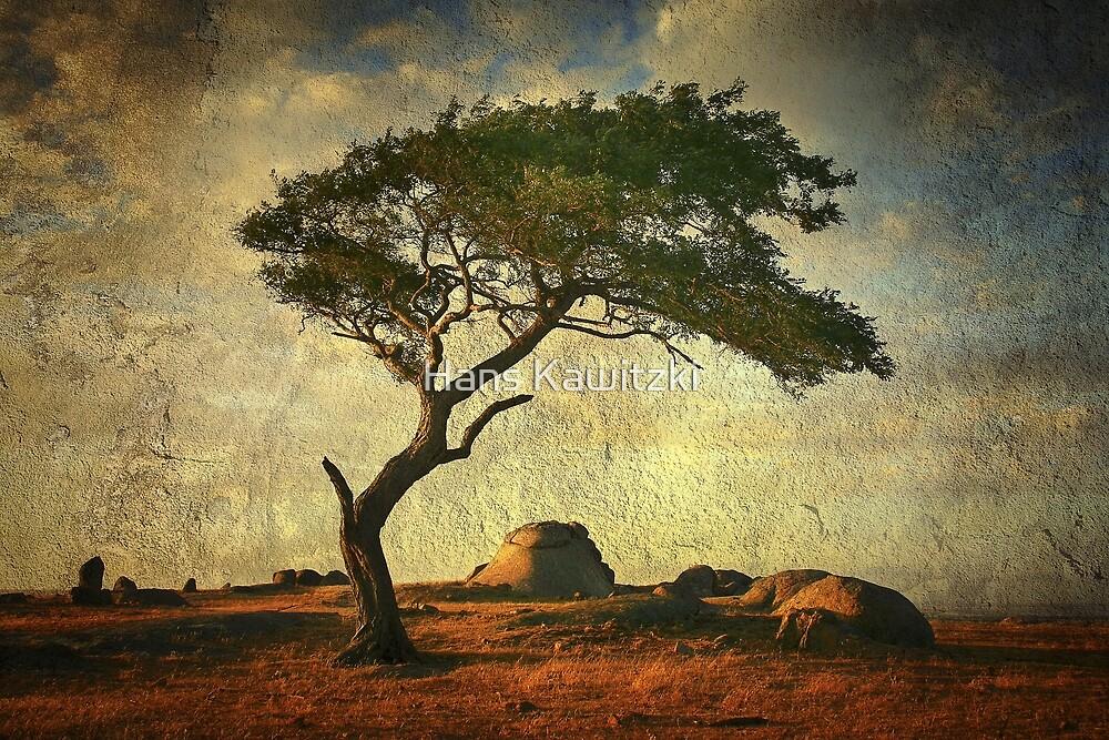 0813 Tree on Textures  by Hans Kawitzki