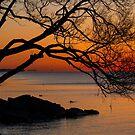 Colorful Quiet Sunrise on the Lake  by Georgia Mizuleva