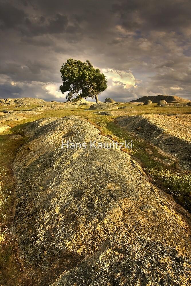 0818 Windblown - Dog Rocks by Hans Kawitzki