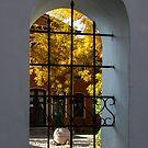 Autumn Through the Fence Window by Georgia Mizuleva