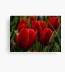 Vivid Red Tulip Garden Canvas Print