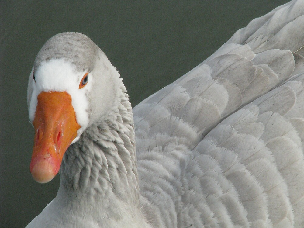 Goose by Corina