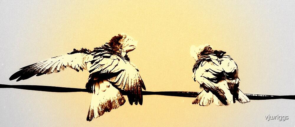 Bird Play by vjwriggs