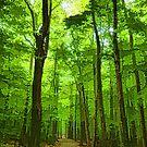 Green Light Harmony - Walking Through The Summer Forest by Georgia Mizuleva