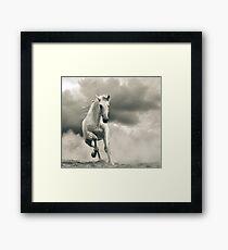 andalusian stallion running Framed Print