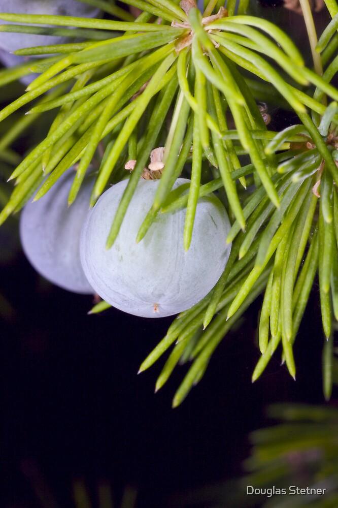 Juniper berries by Douglas Stetner