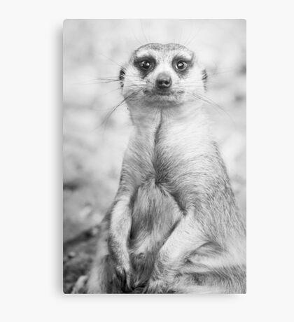 Meerkat portrait Metal Print