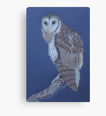 Australian Masked Owl, colour pencil art Canvas Print
