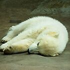 Sleeping Polar Bear Cub by P&T Photography