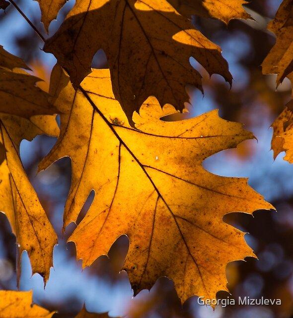 Glowing Autumn - Golden Oak Leaf by Georgia Mizuleva