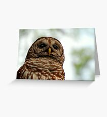 wacissa owl, bust Greeting Card