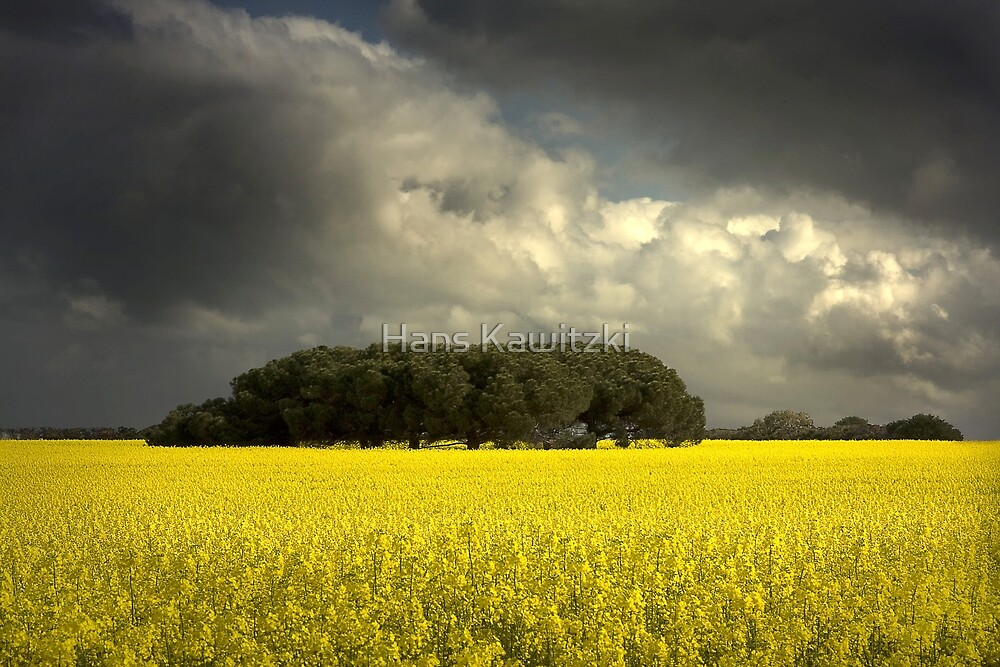 0842 Canola and storm clouds by Hans Kawitzki