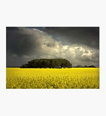 0842 Canola and storm clouds Photographic Print