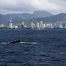 Whale Watching in Honolulu, Hawaii by Georgia Mizuleva